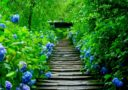 紫陽花をみる*鎌倉の旅